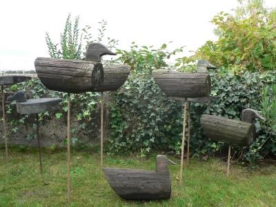 canards appelants de la Beausse